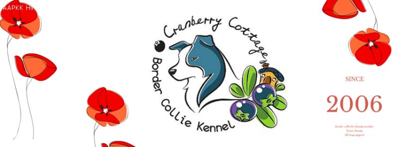 Cranberry Cottage Border Collie Kennel